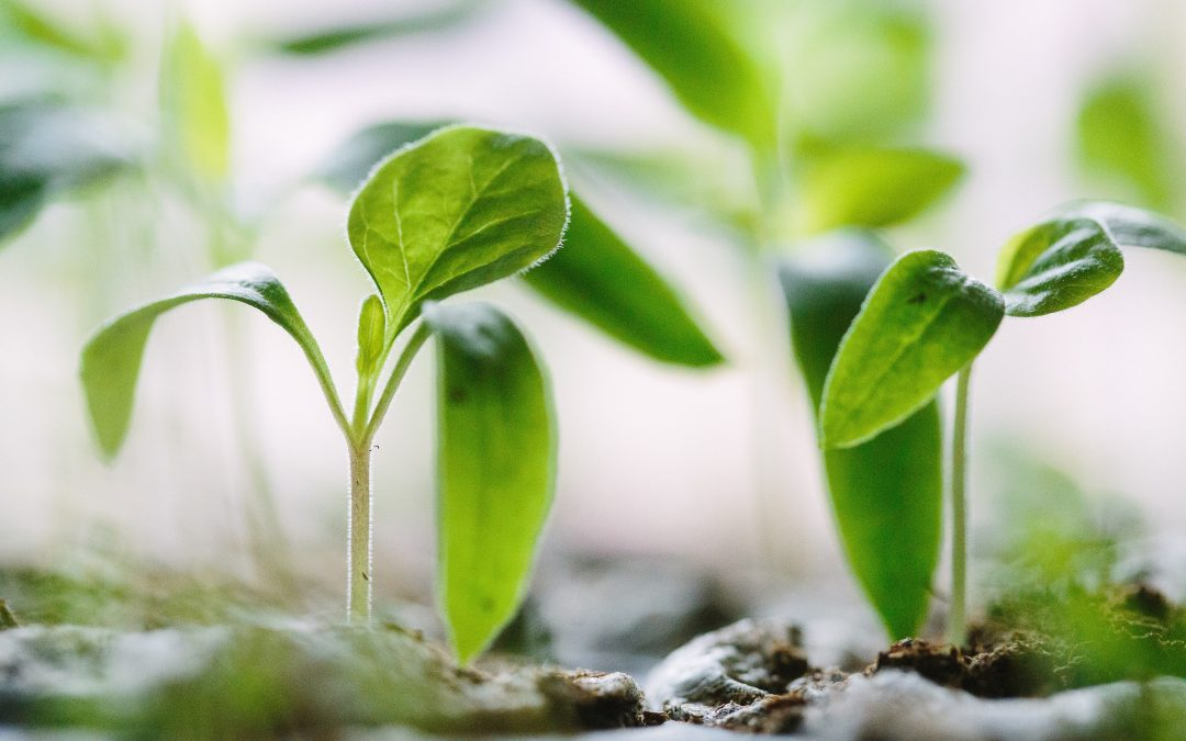 10 Simple Ways to Make an Organic Profit by Going Green