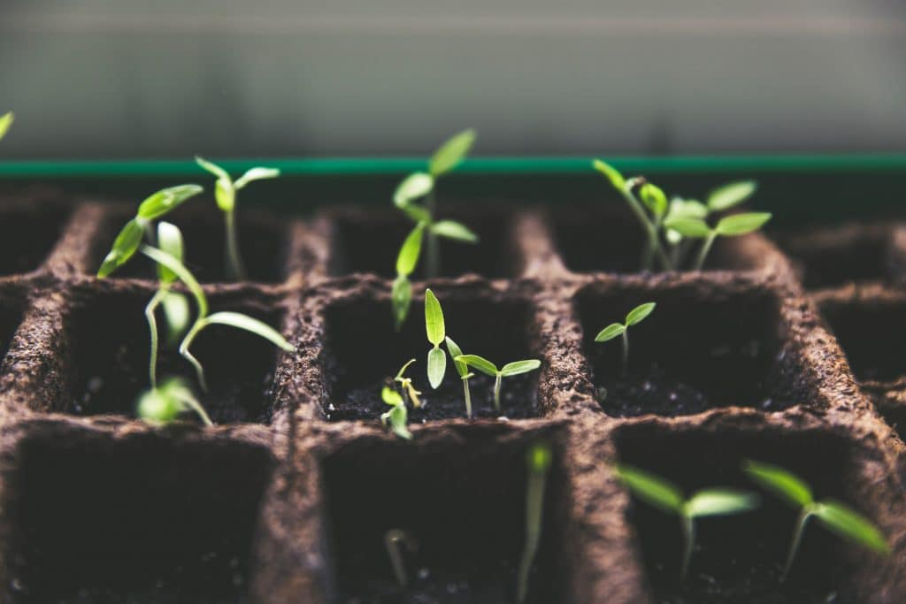 growing-a-cleaing-business