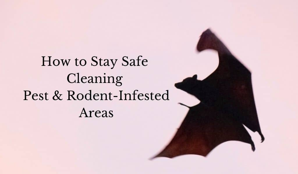 How to Stay Safe Cleaning Pest & Rodent-Infested Areas